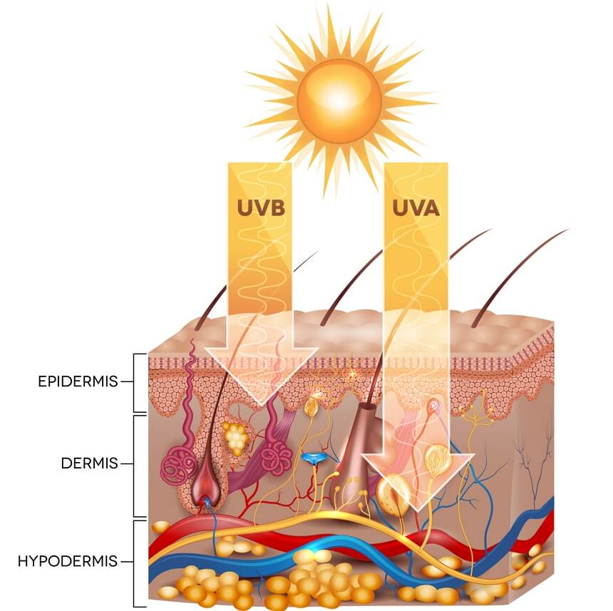Promieniowanie UVA iUVA - wnikanie wwarstwy skóry